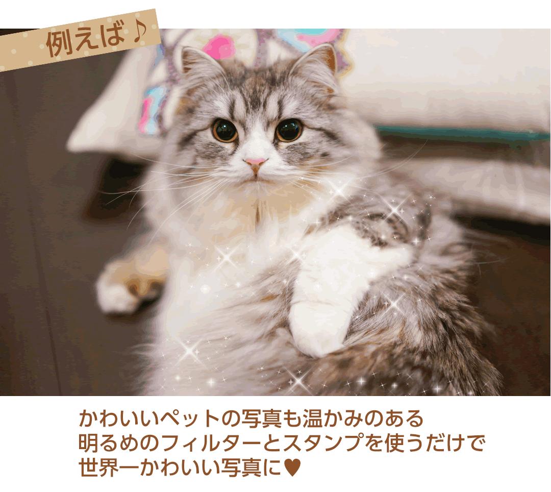 写真加工例猫