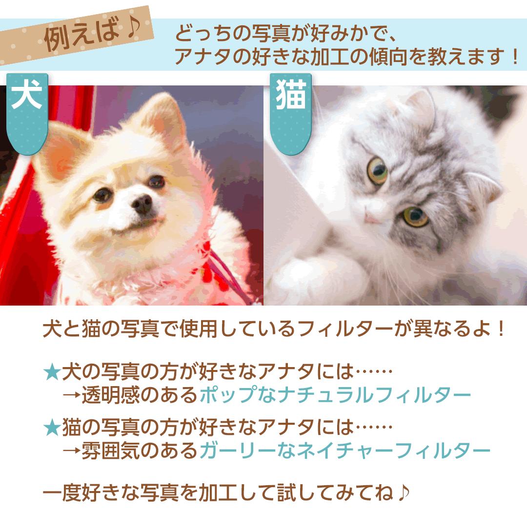 写真加工例猫2